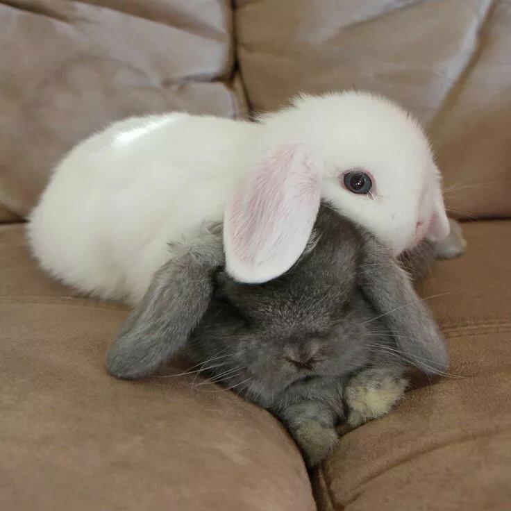 Картинка целующиеся зайчики