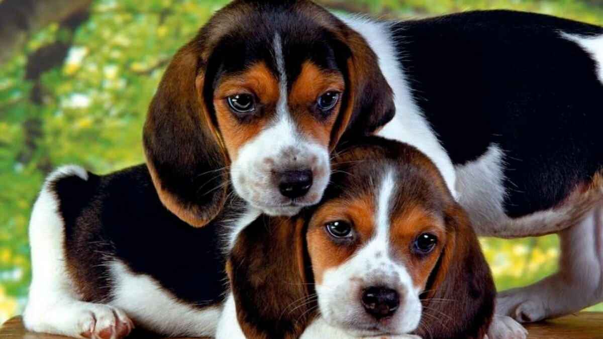 расскажет картинки щенята породистые одних