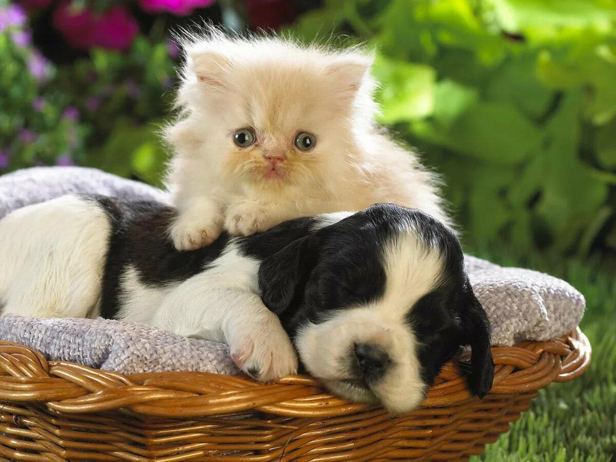 Картинки собачка кошка