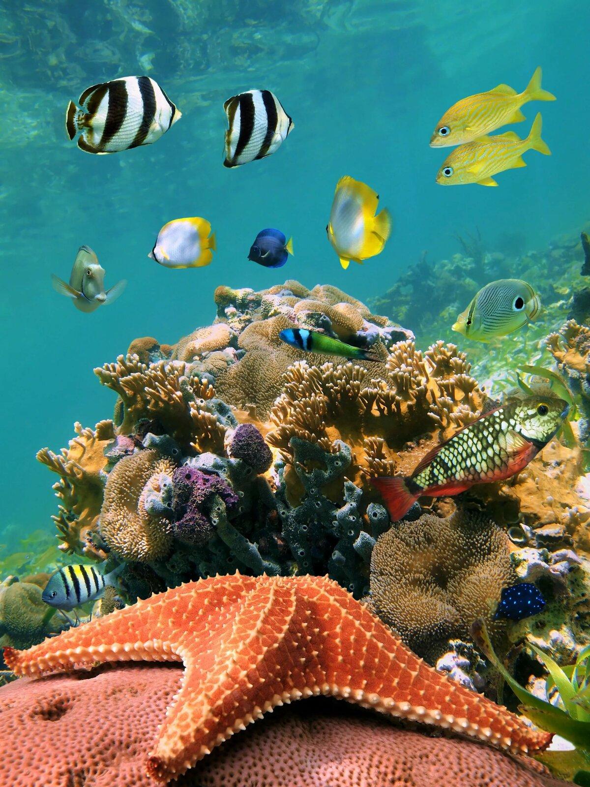 Морское дно в картинках