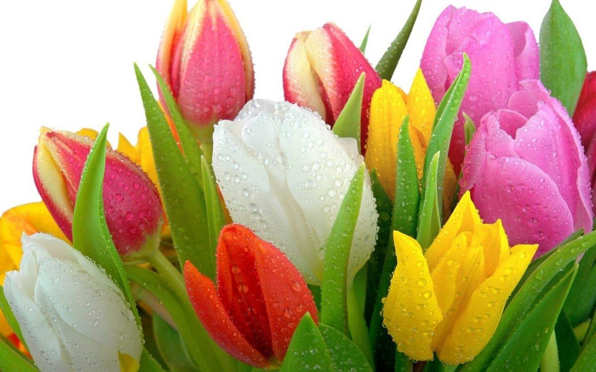 Про жизнь, цветы картинки красивые