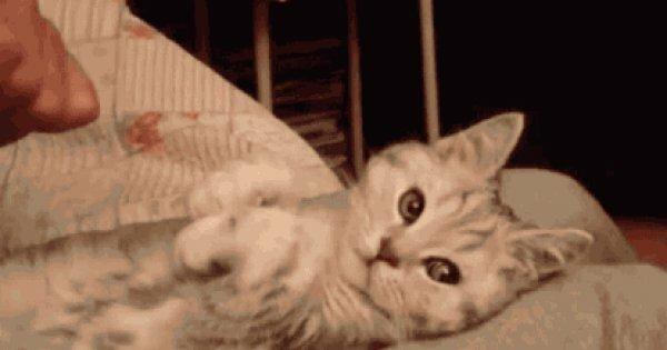 Гифки кошки самые смешные