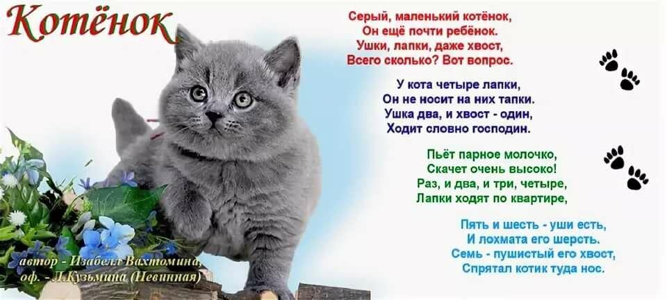 стихи о котиках короткие решением вопроса, как