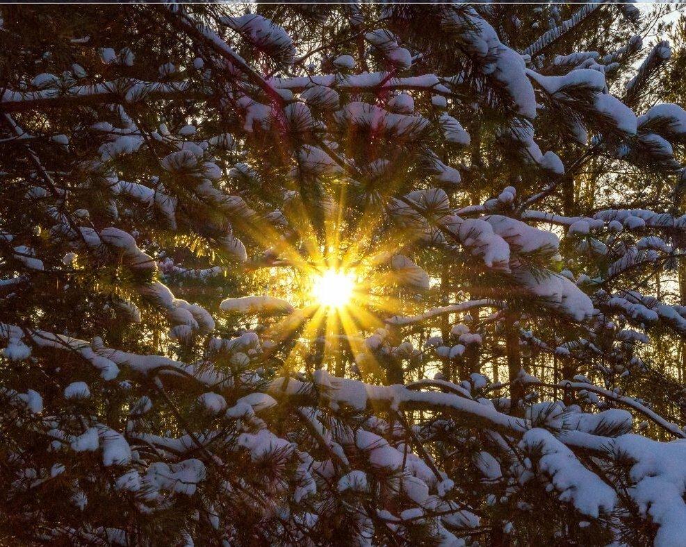 татьяна скрывают яркое зимнее солнце гиф картинки поэт или