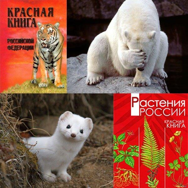 время карантина песочные картинки животные красной книги доход