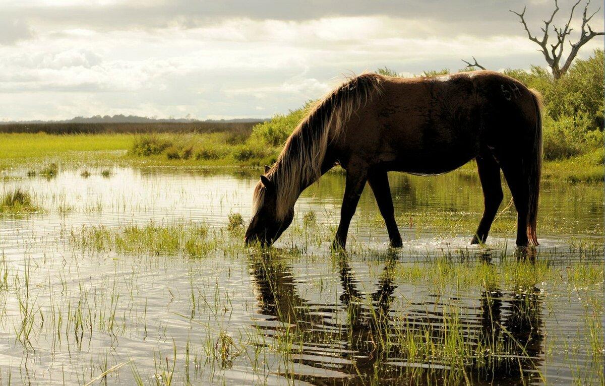 Картинки вода животного