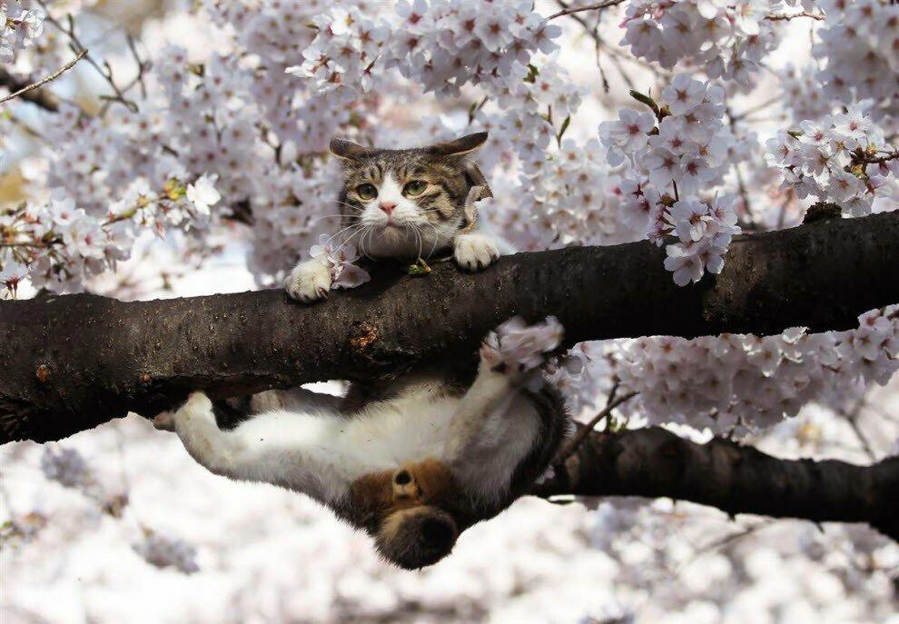 Картинка про весну прикольная