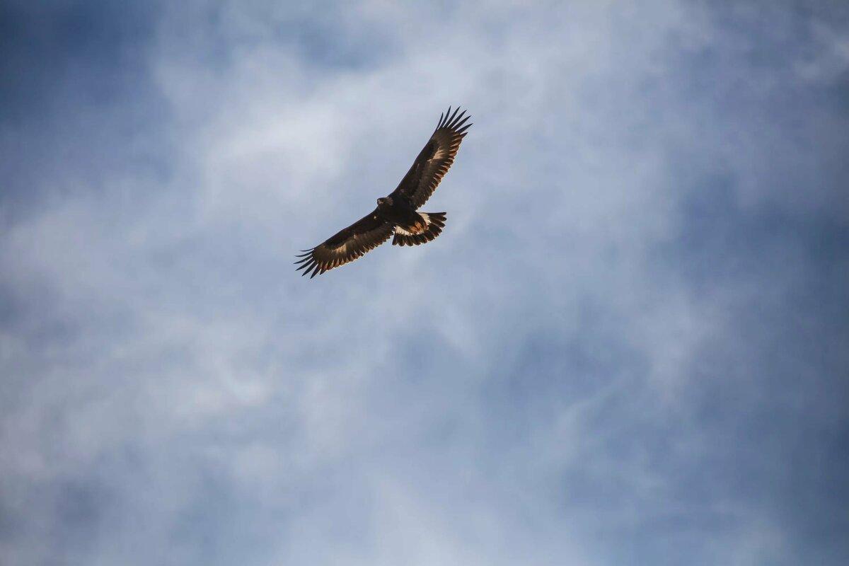сокол в небе фото качестве талисмана