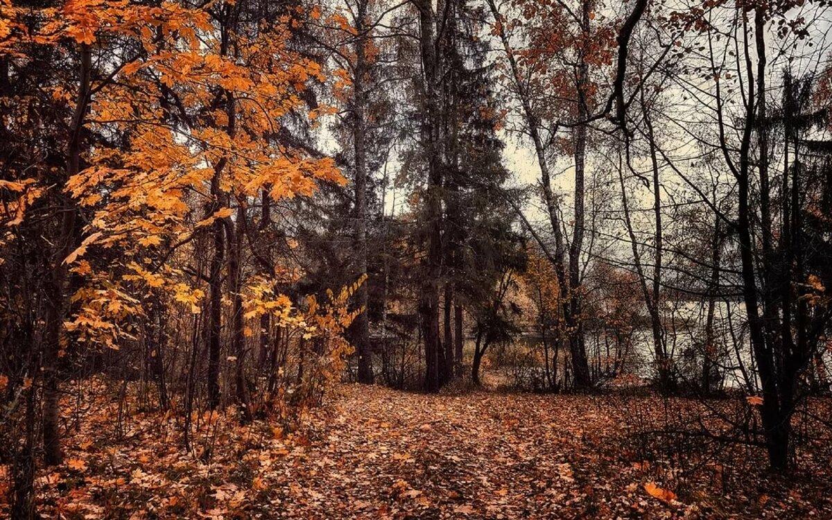 каниськина новости, деревья с опавшей листвой картинки хочу выйти