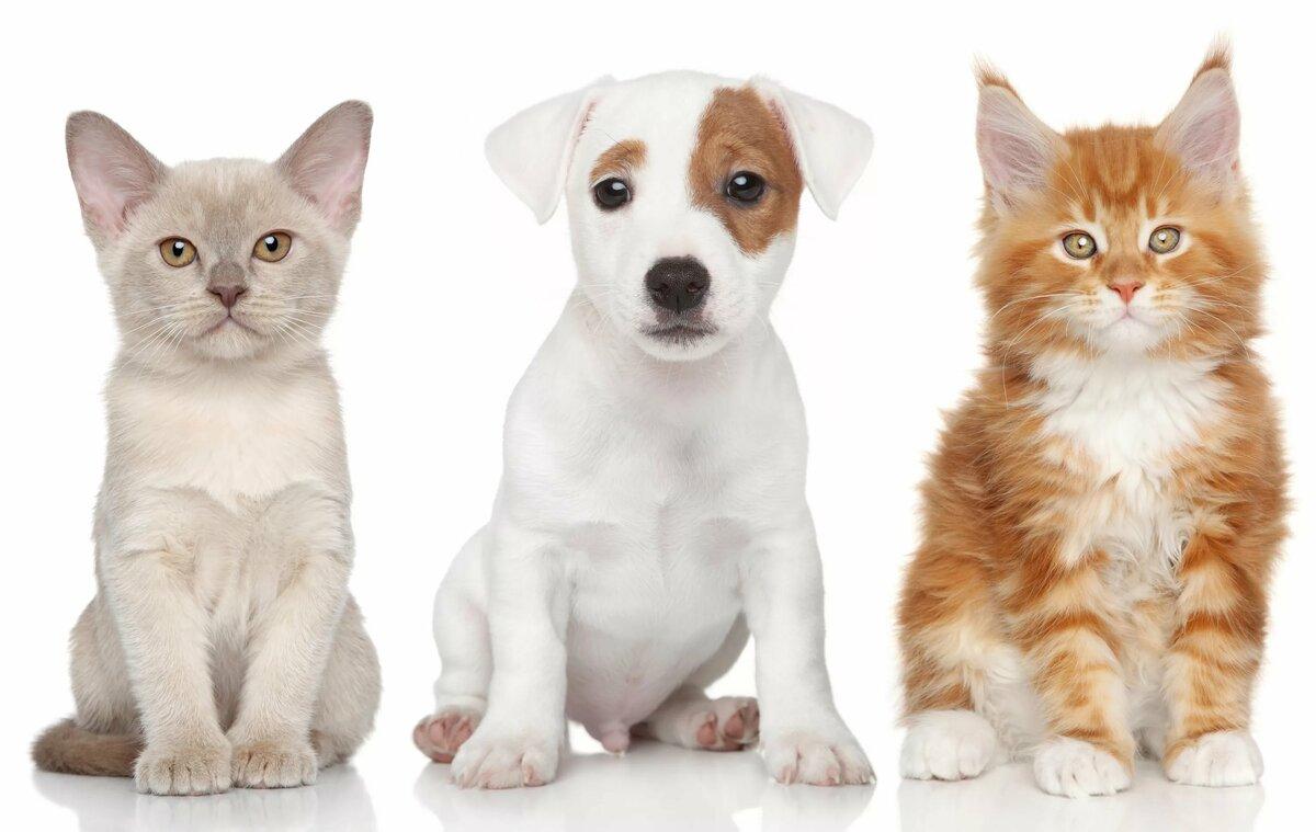 породистые коты и собаки картинки цена