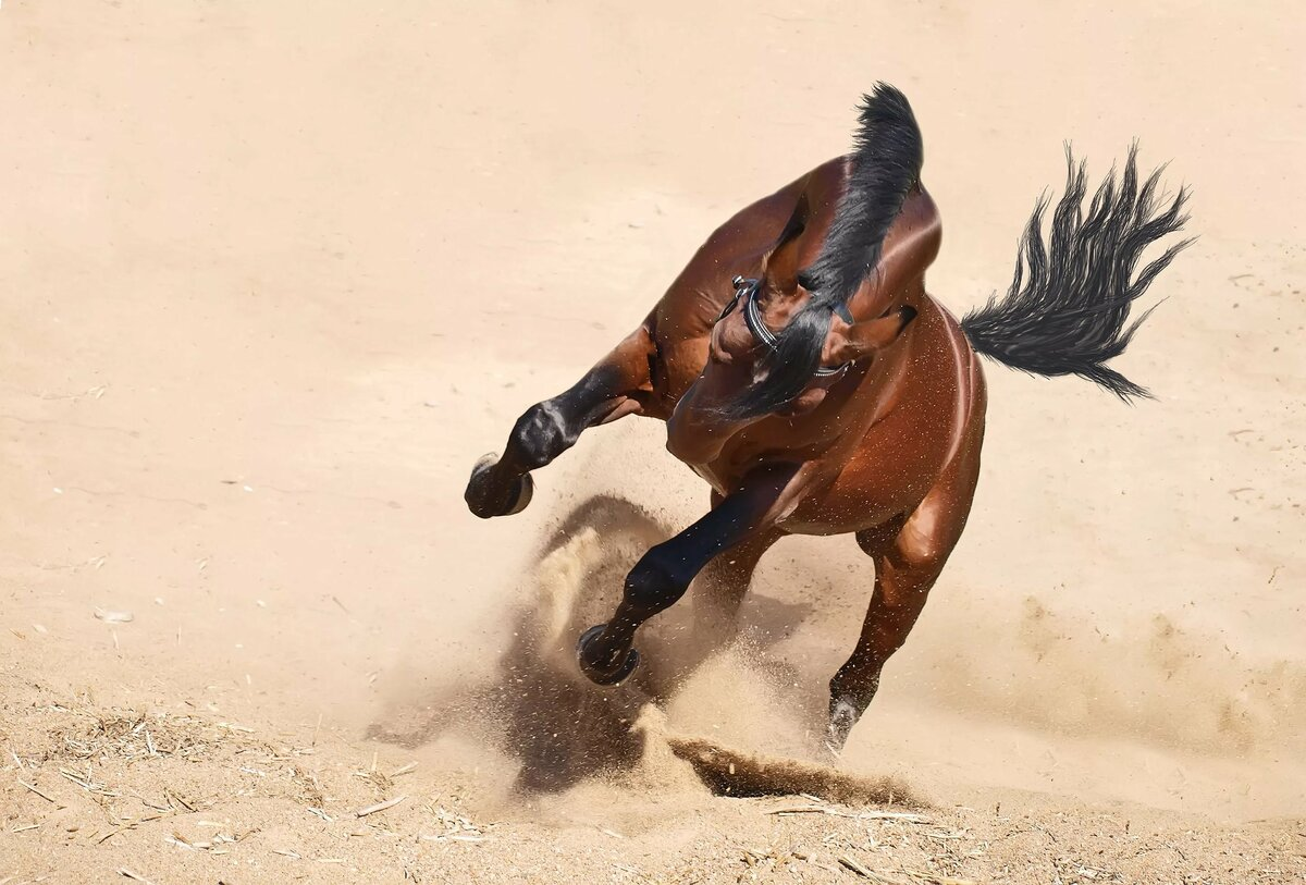 дом картинки убегаю от коня картинки