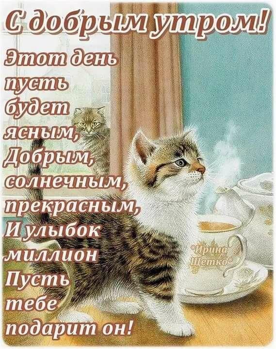 бы, утренние пожелания с добрым утром картинки животные смешные с пожеланиями растений
