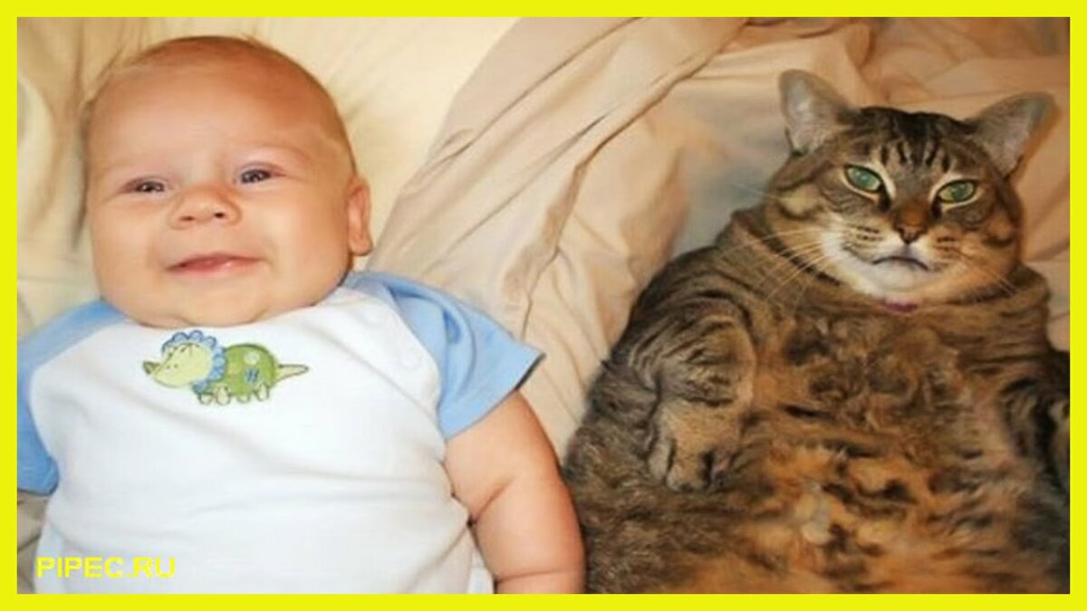 смешные до слез картинки с котами и младенцами паразитирование