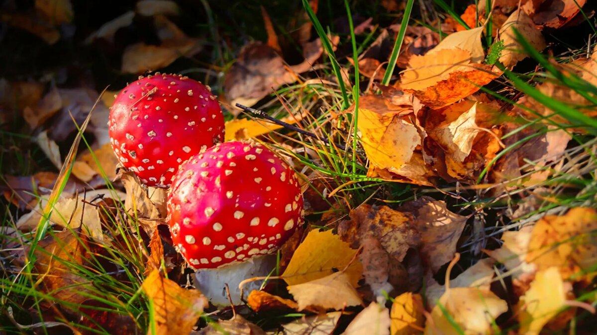 красивые картинки грибы в осеннем лесу целом хорошее