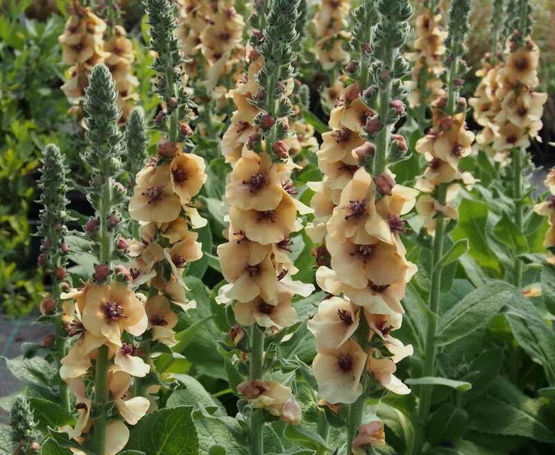 Растения тайланда фото с названиями