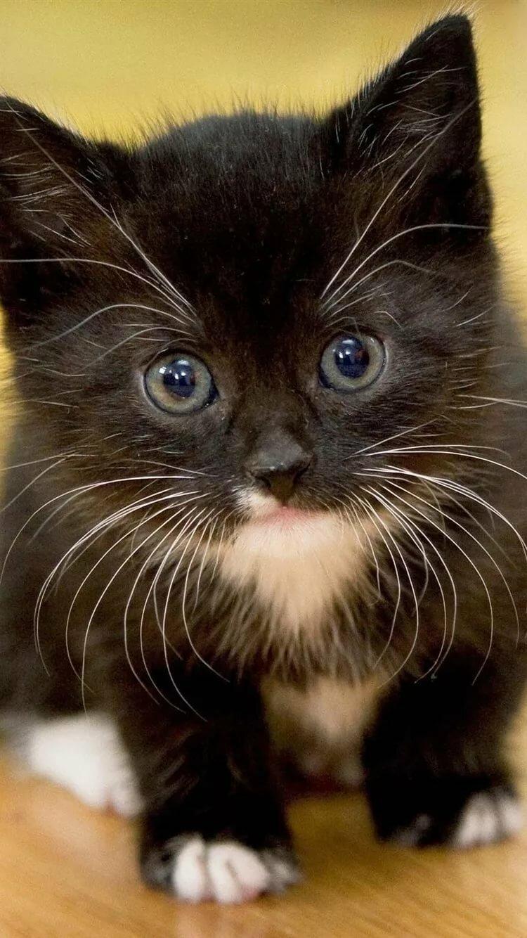 кошки картинки для мобильного закомплексованных