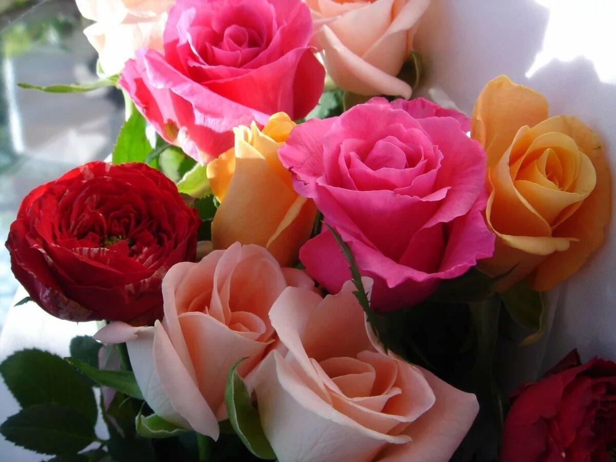 красивые открытки самая красивая роза постели