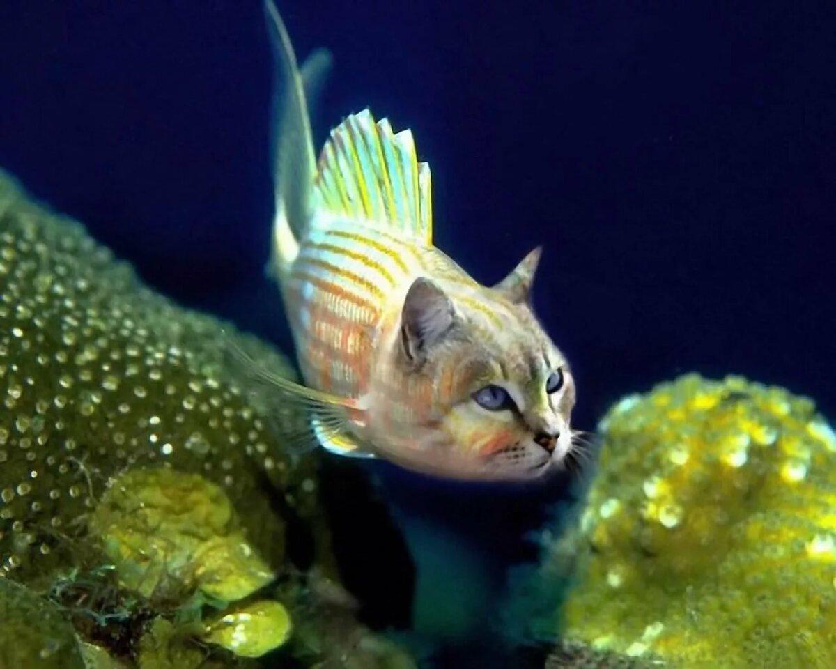 открытки редкие рыбы с картинками профессиональные дорогие фотоаппараты
