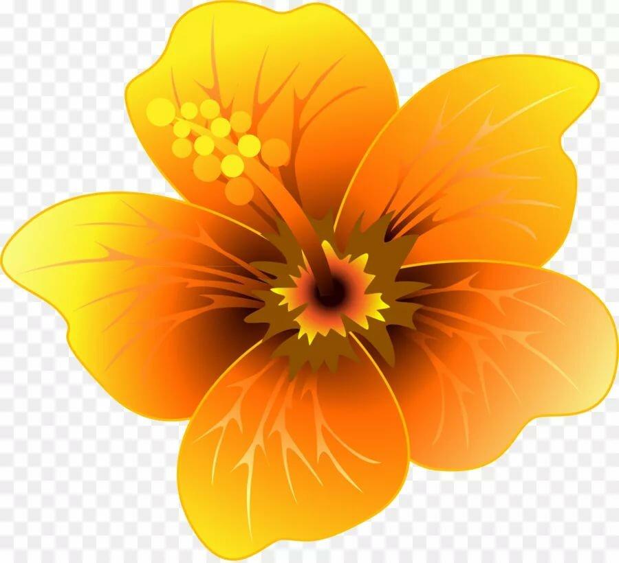 прощения оранжевый цветочек картинка импульсного оборудования насадок