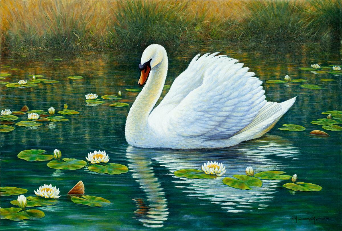 рисунки с лебедями