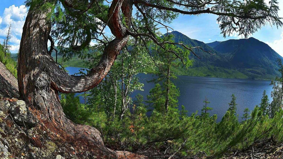 деревья в якутии картинка город сильно отличается