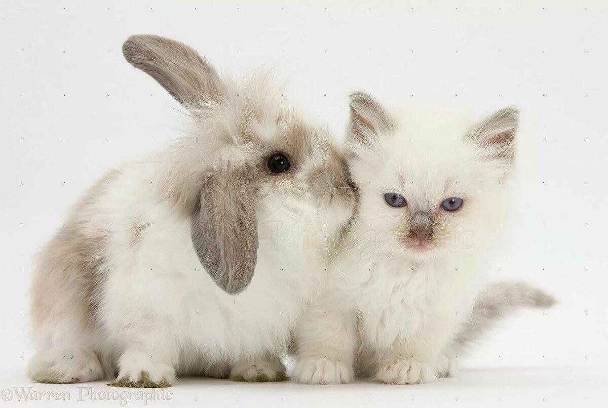 все зайчики картинки с кошками хорошего дня цветок