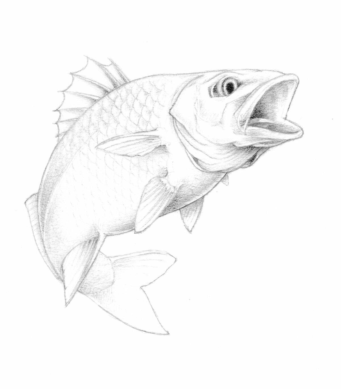 Рыбы картинки рисованные карандашом