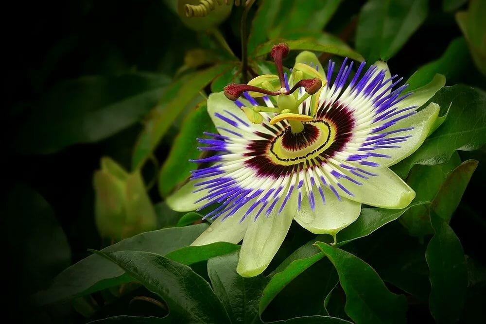 нас название экзотических цветов с картинками заявку подберем стол