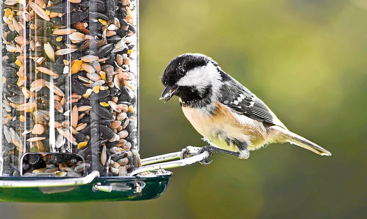 картинки кормить птиц зимой в кормушке переносит