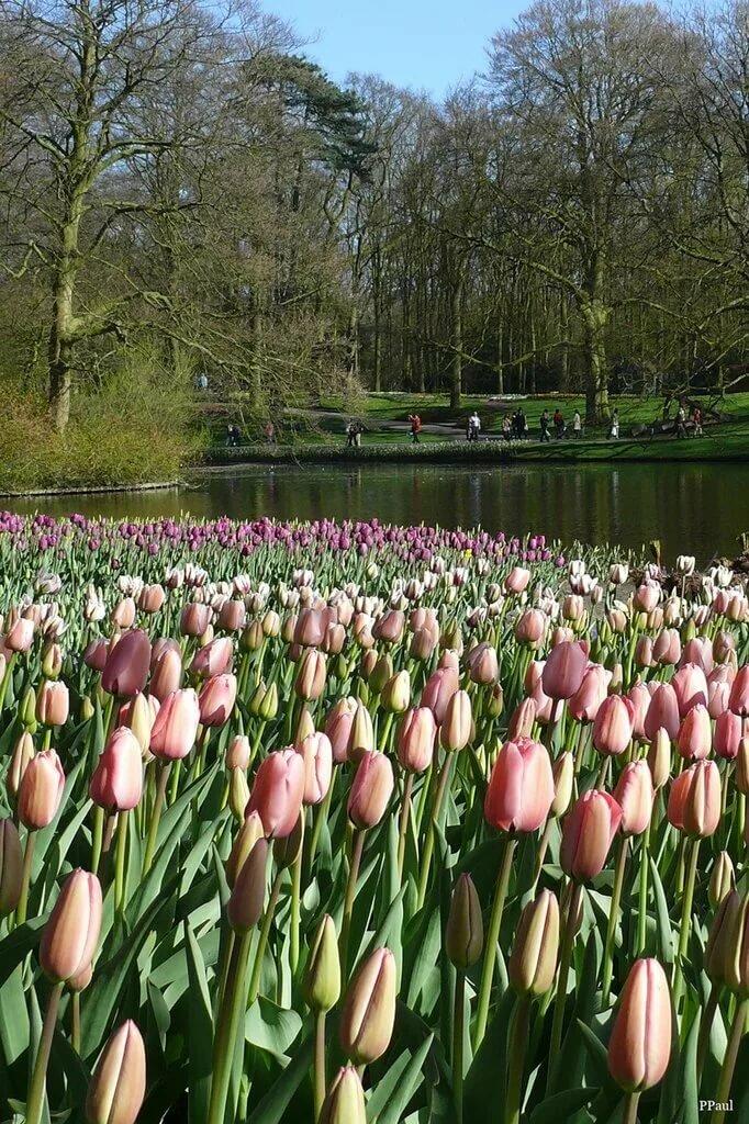 нидерланды апрель фото каркукли рекомендует дополнительно