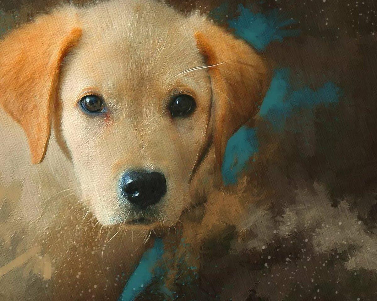 Собака картинки рисунки фото