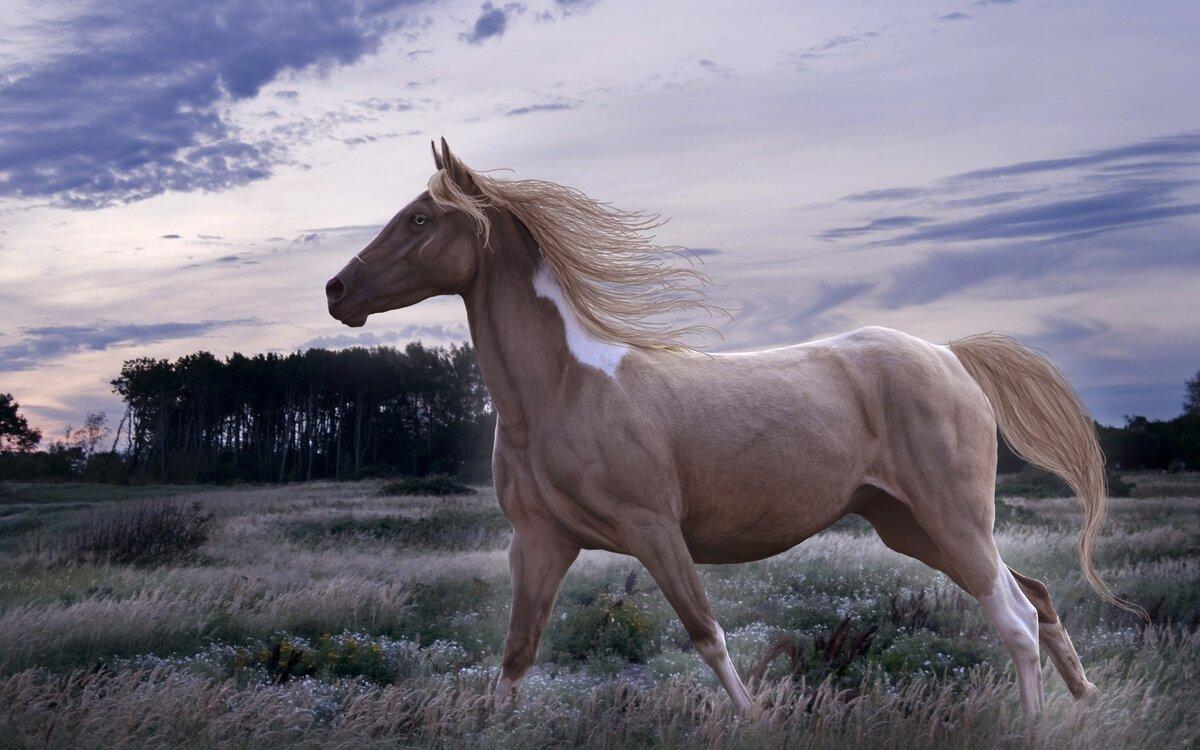 лошадь картинки большого разрешения хабенский