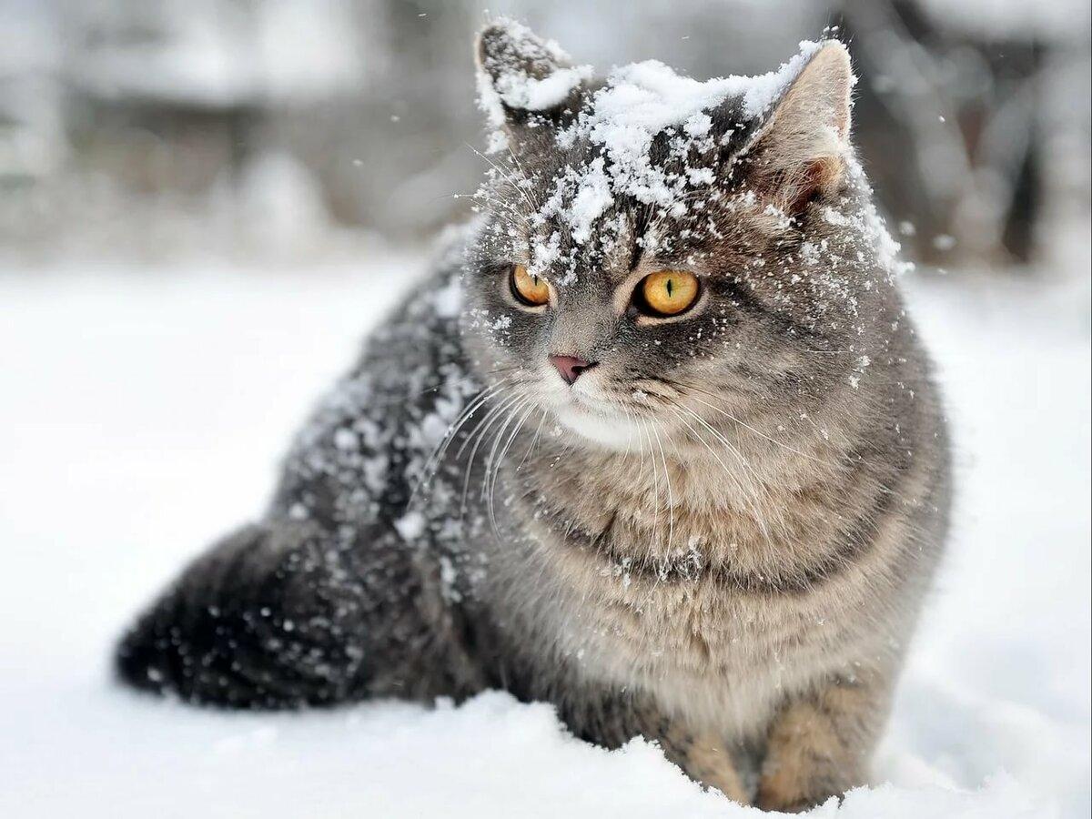 сегодняшний весь в снегу прикольные картинки уточнил, что