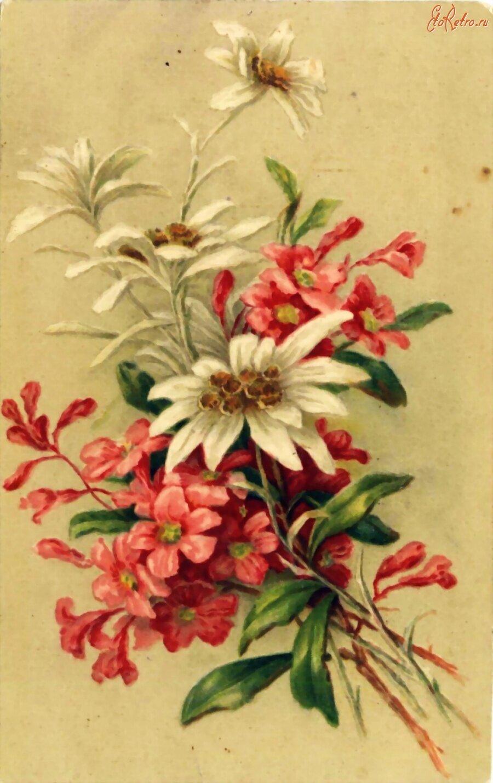 Старые цветы картинки