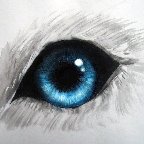 Картинки для срисовки волк в глазу