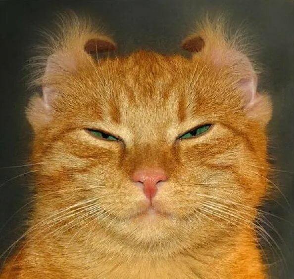 Кошачьи приколы с надписями картинки
