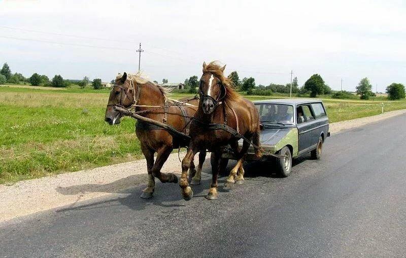 Смешные картинки про лошадиную силу