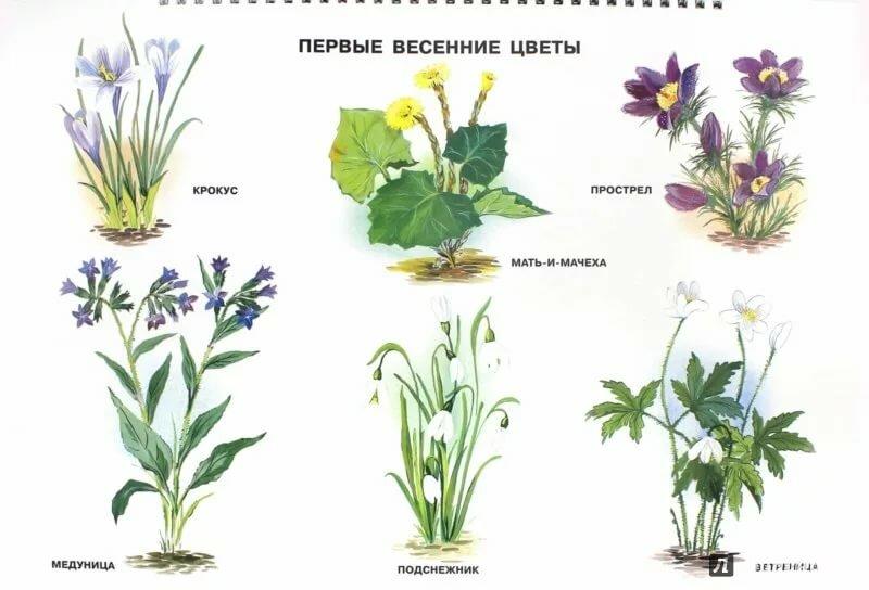 Картинки растений для детей с названиями