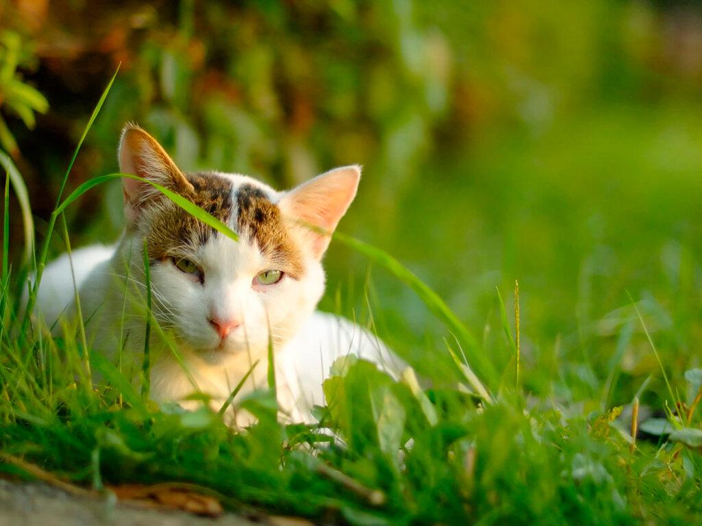 пост ссылкой красивые картинки кошки на природе своими впечатлениями