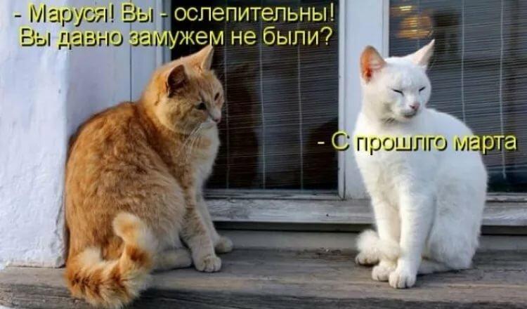 Хороший кот до марта ждать не будет в картинках