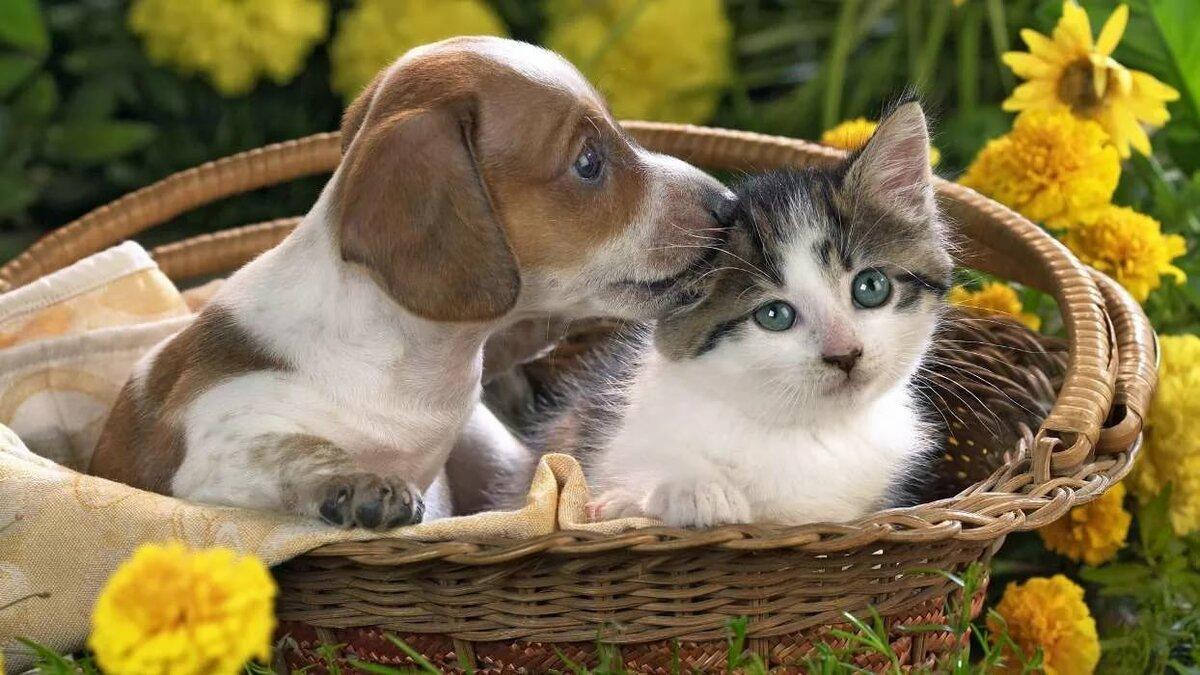 Картинки кошек и собак красивые