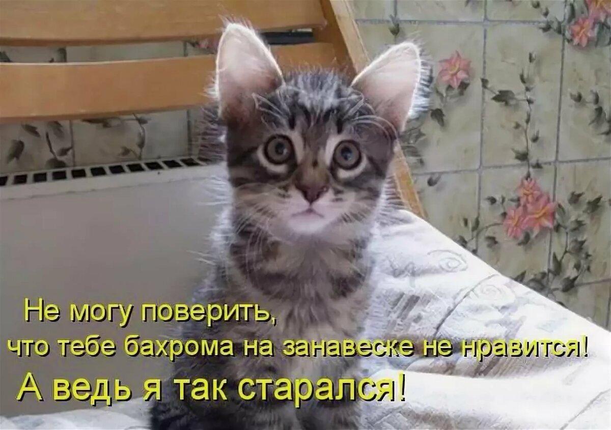 Картинки кошек и котенком с надписями