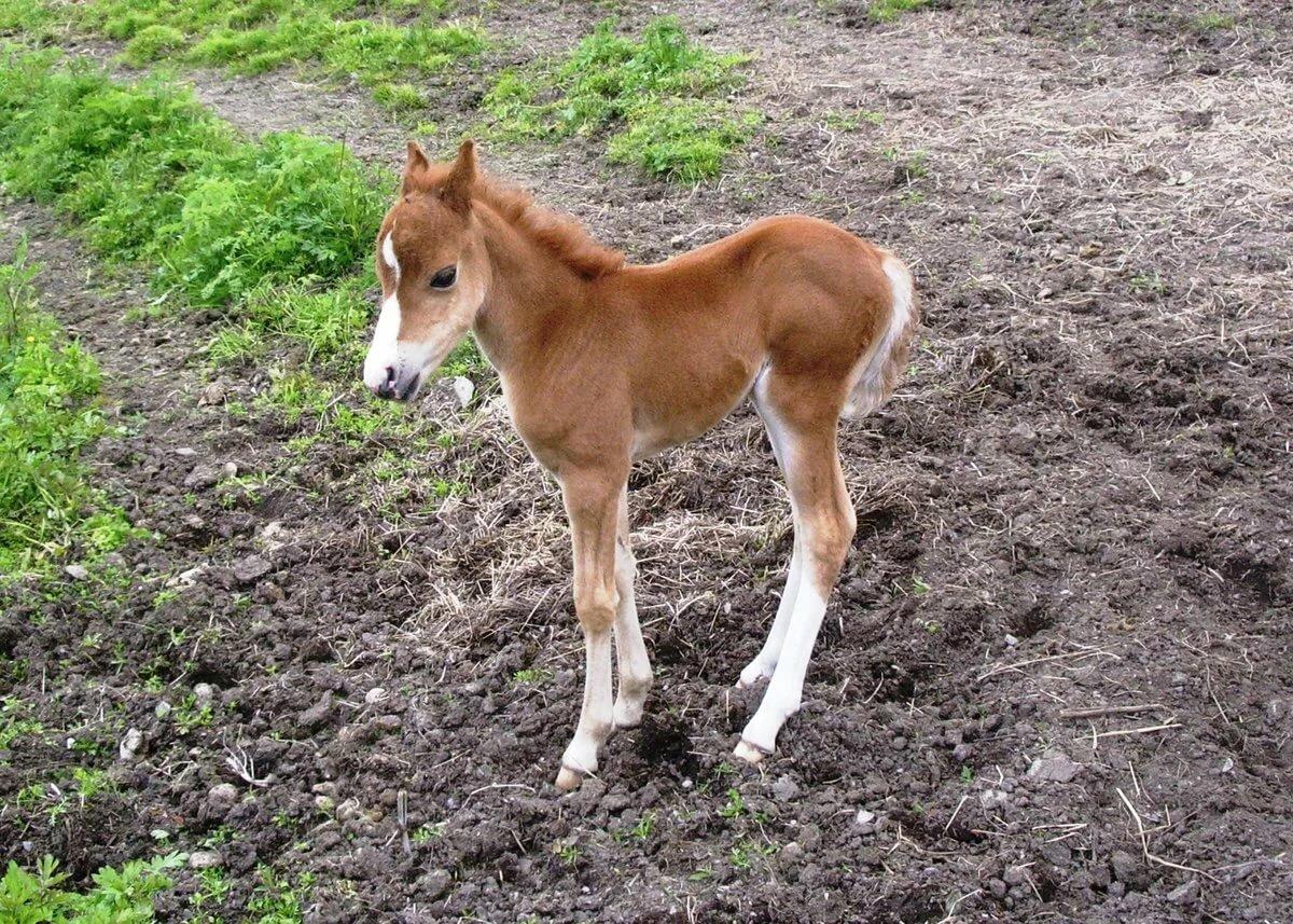 картинки животного лошадку что видит