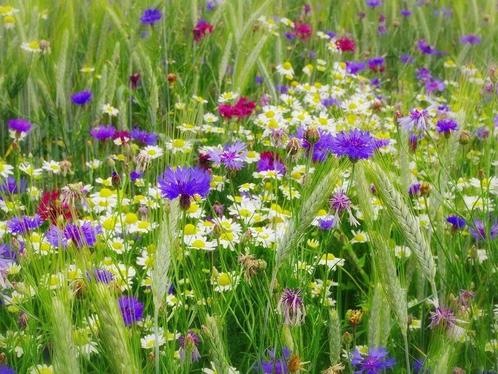 Магазины одесса, полевые цветы травы купить минск