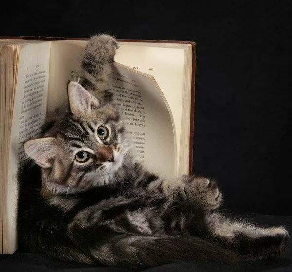 Прикольные картинки с котами и подписями, иней осенью открытка