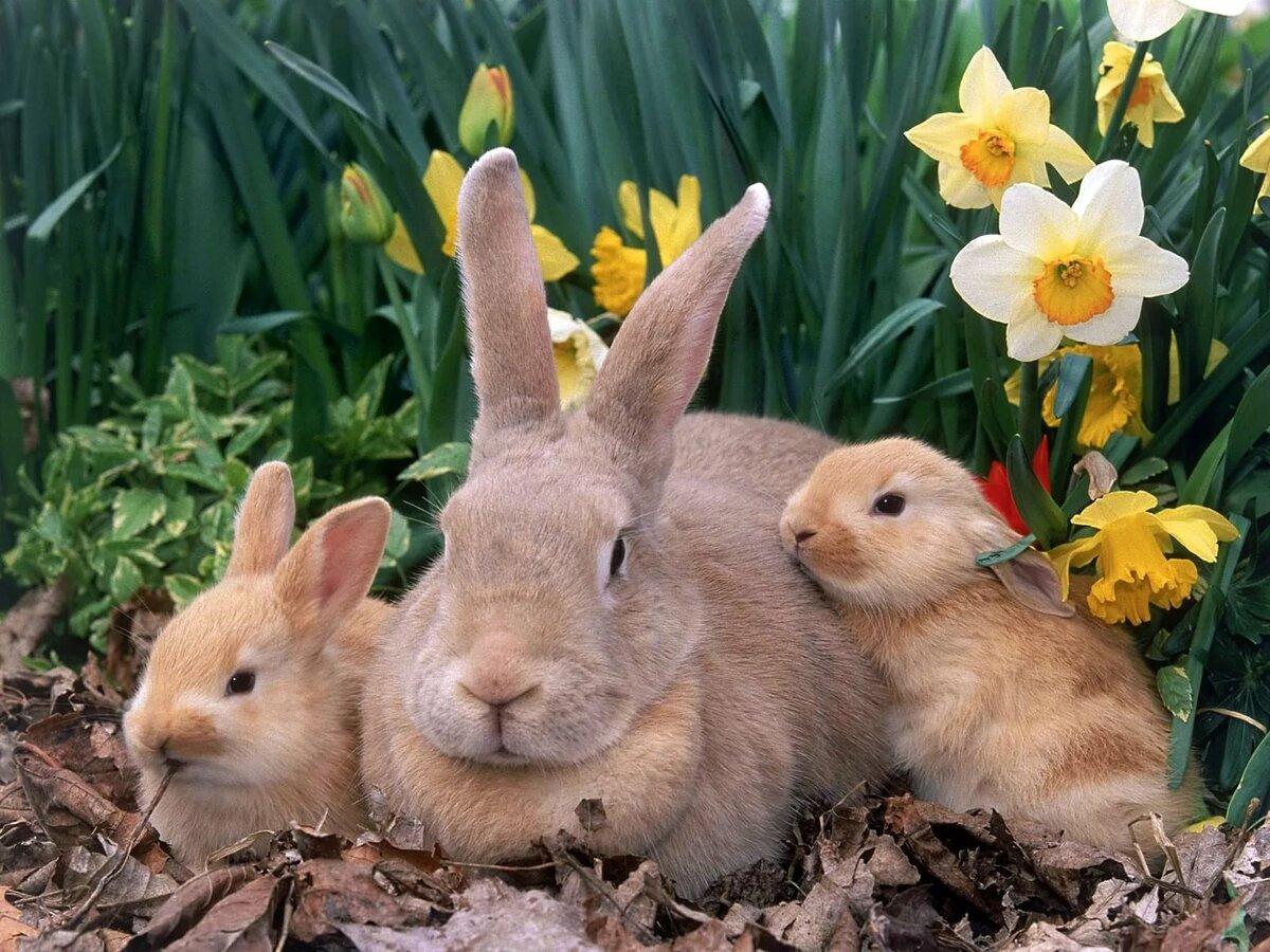 таким картинки про зайцев красивые увлекаться помнить, что