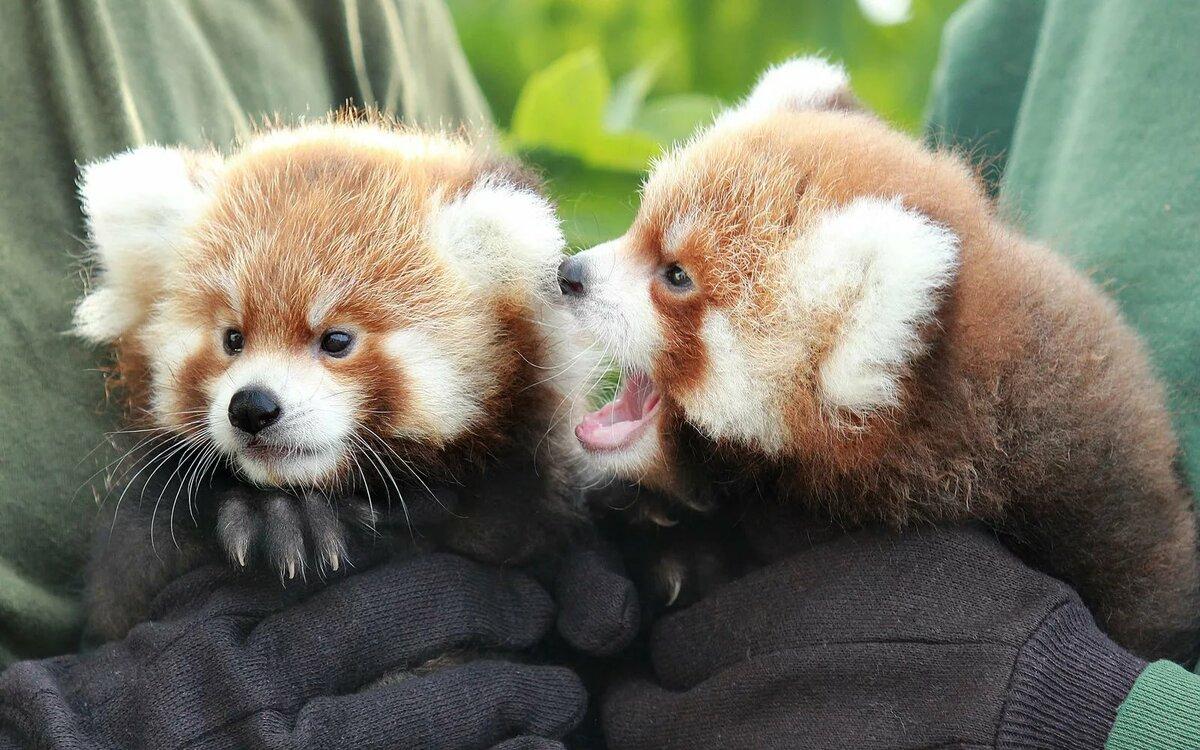 Картинки с самыми милыми животными в мире нем разместился