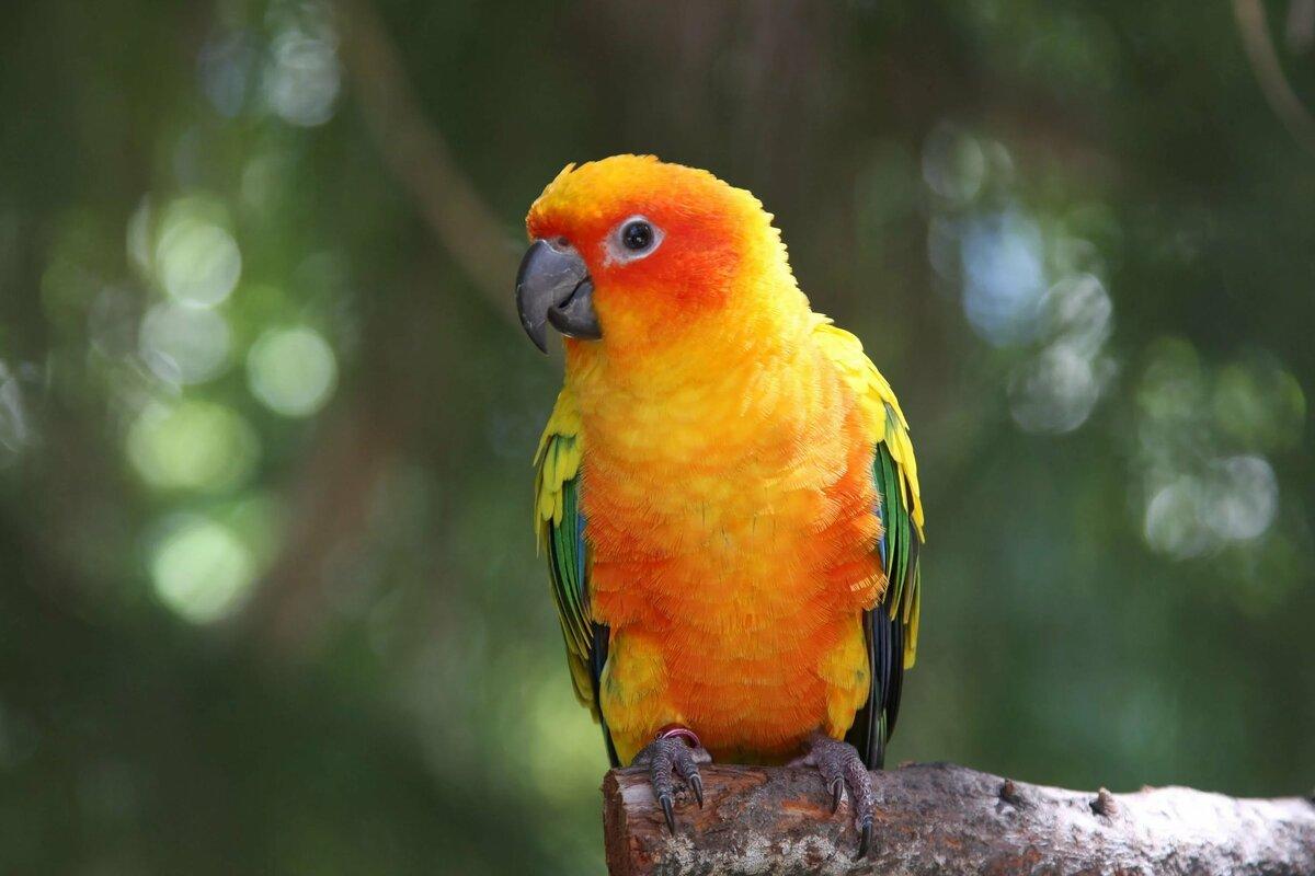Открытке татьянин, картинки попугаев красивые