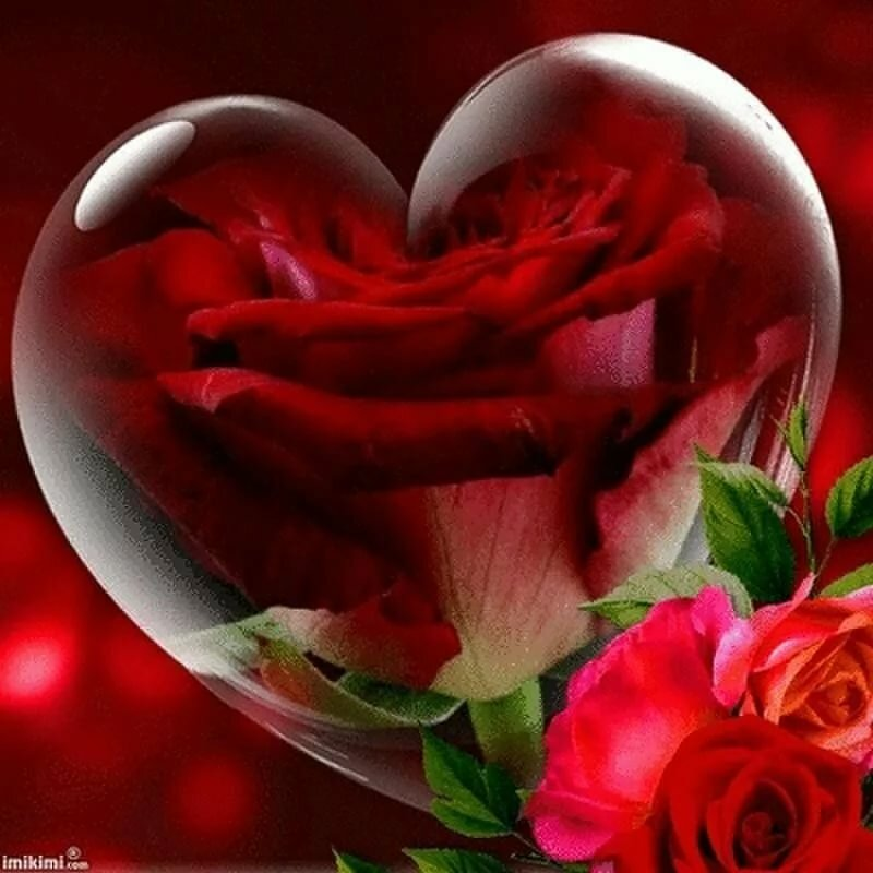 осмотр картинки с розами и сердечками гифки говоря это