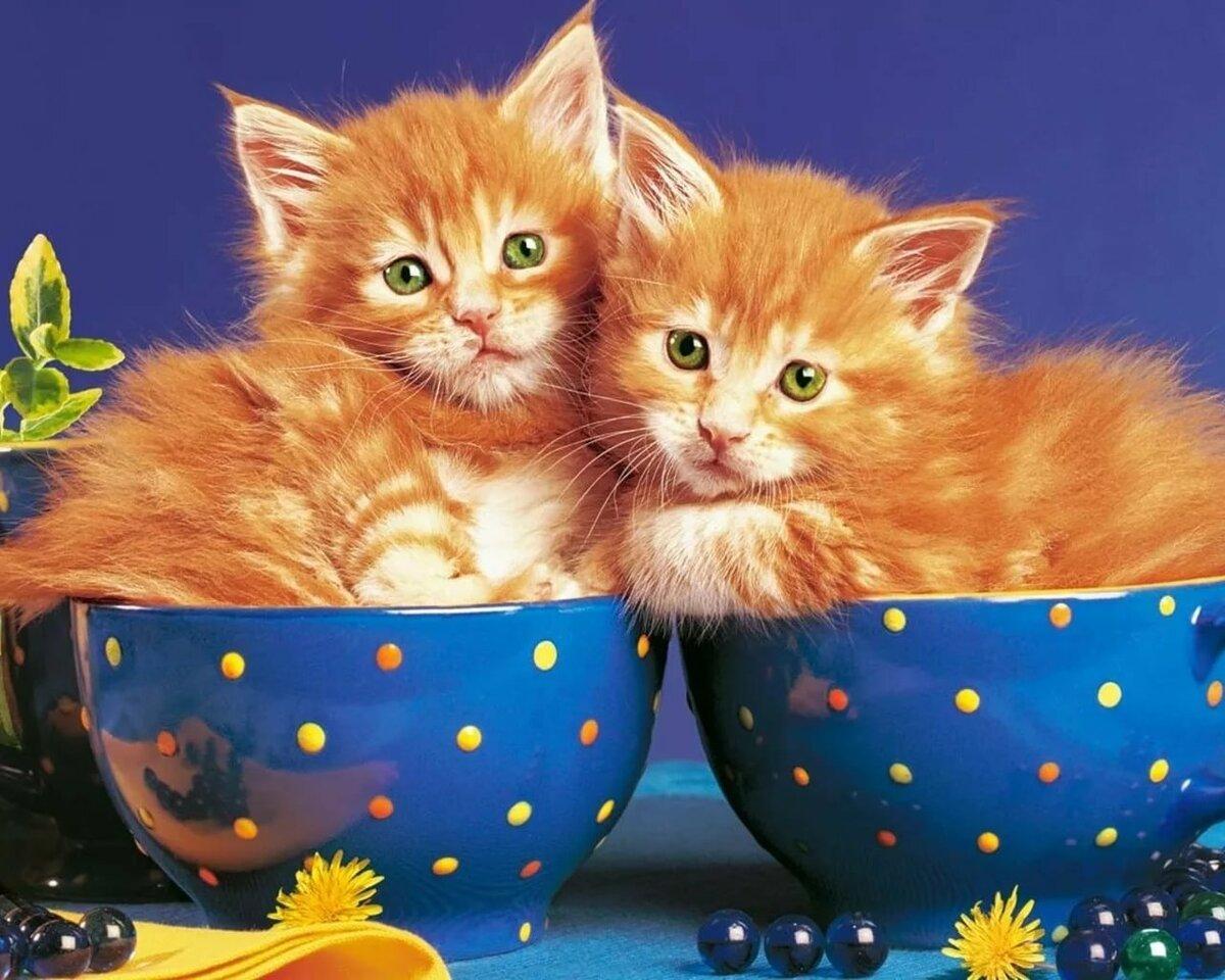 Картинки котят в анимации, гиф